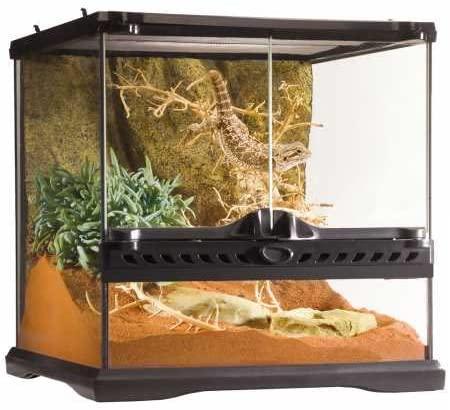terrario gecko económico