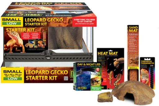 terrario gecko kit